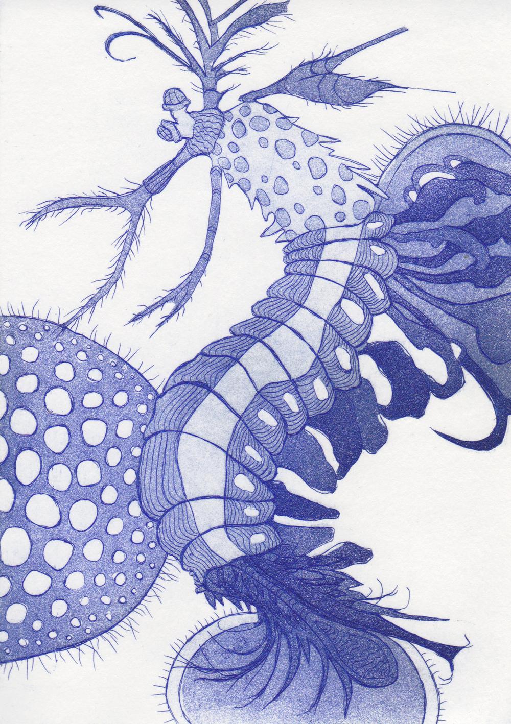 Stomatopod