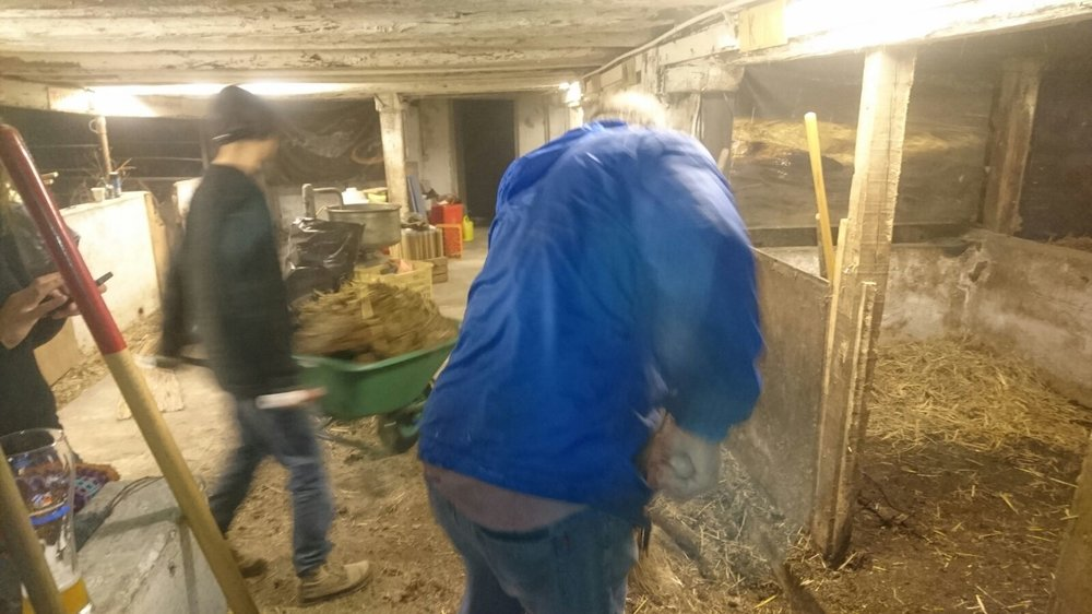 The day before: Mucking out the stable underneath the castle in preparation for the exhibition.