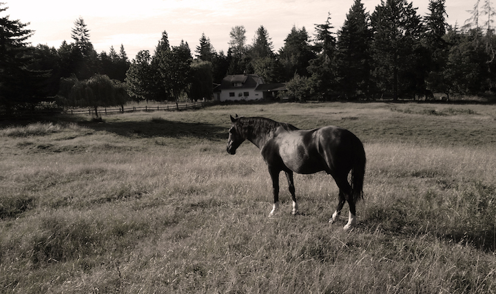 Blue, one-eyed rescue horse.