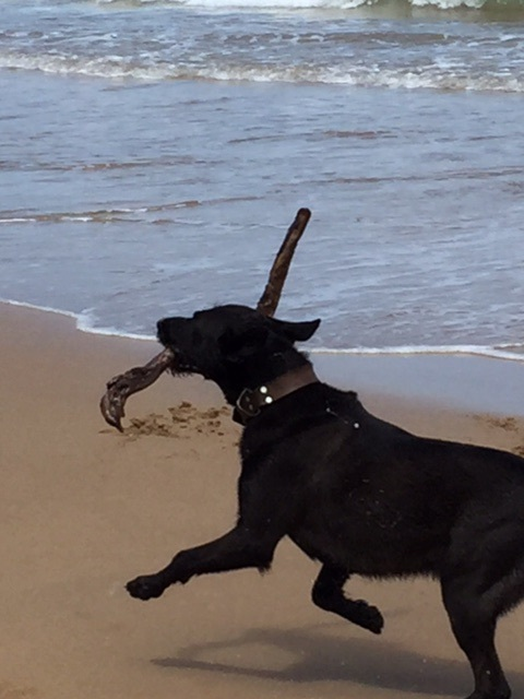 The dog with stick, and joy