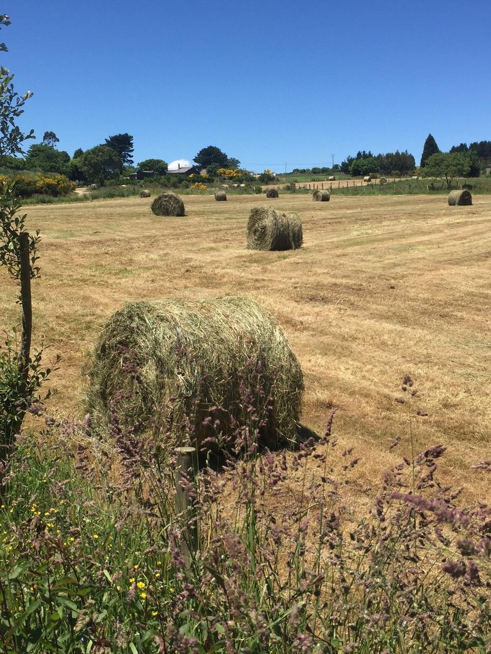 A few fields