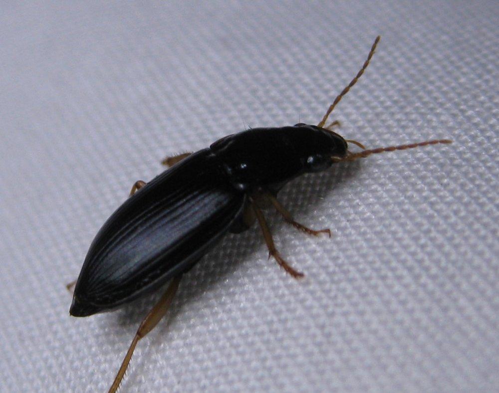 small-beetles.jpg
