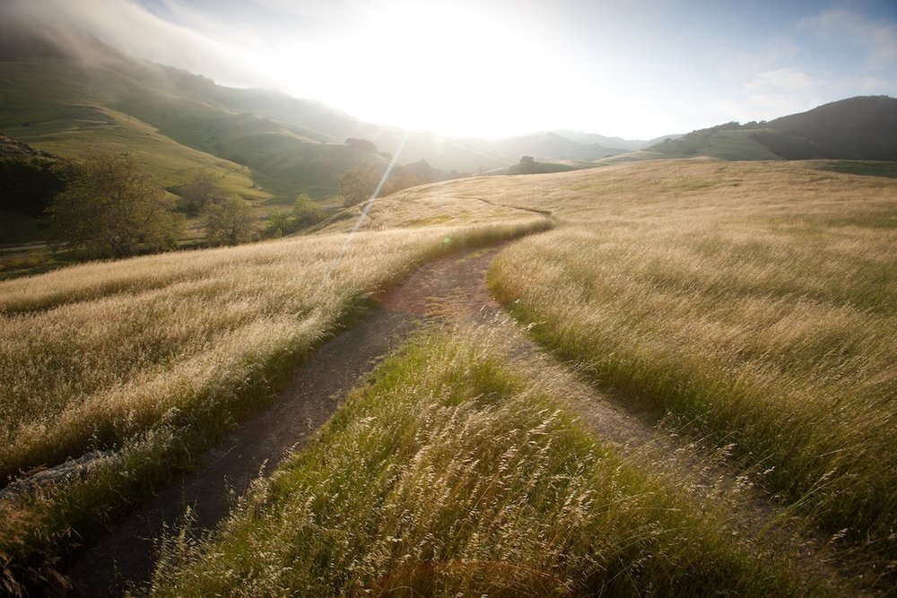 Path-Ahead.jpg