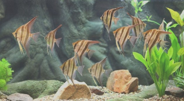 1516899784-fish-for-fresh-water-aqariums-freshwater-tropical-fish-buy-tropical-freshwater-fish-tank.jpg
