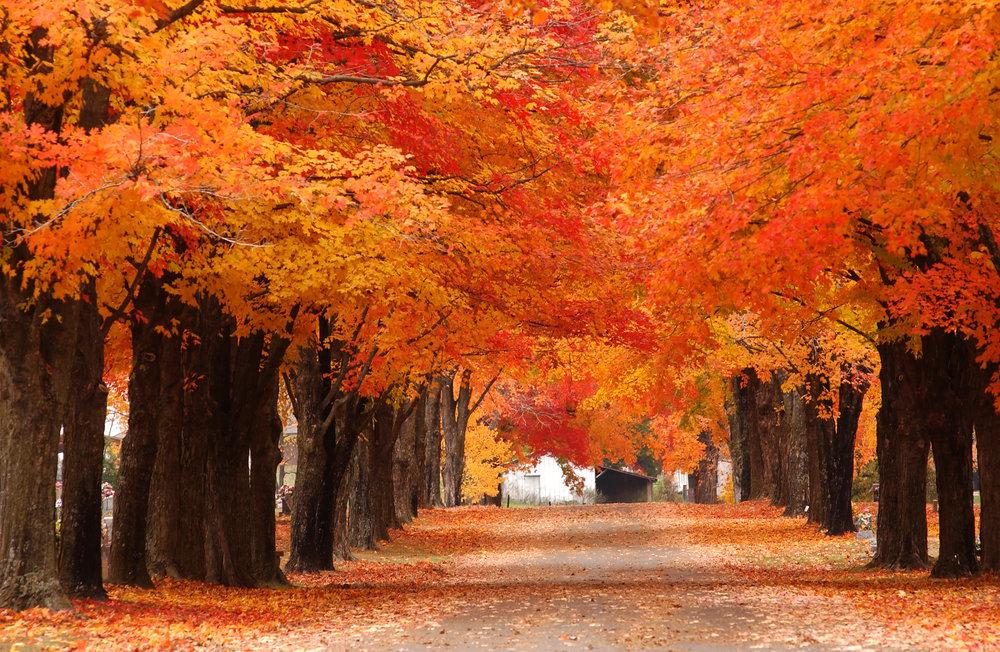 Fall_Color_Harrison.jpg