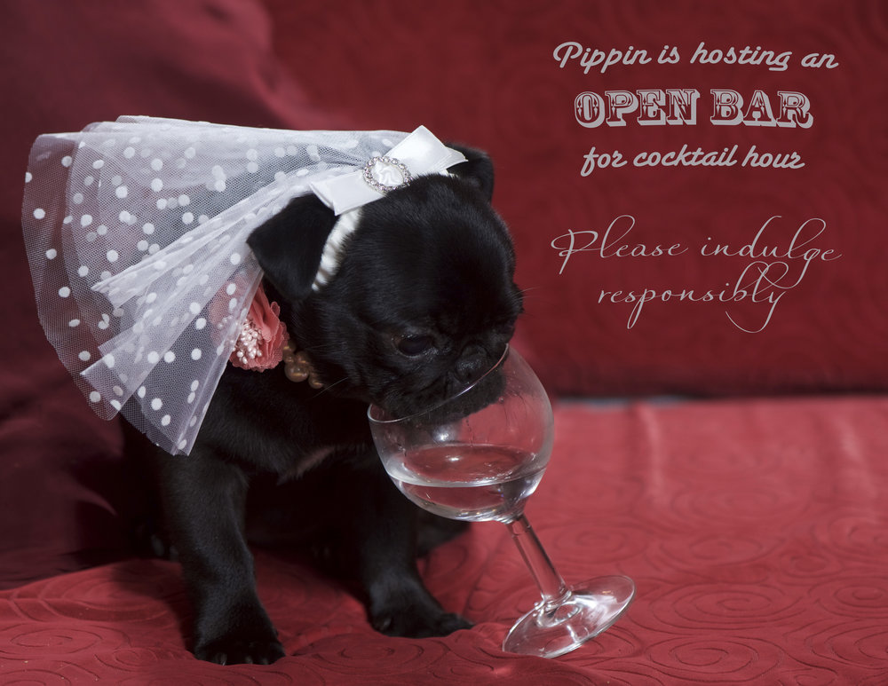 Pug wedding invite