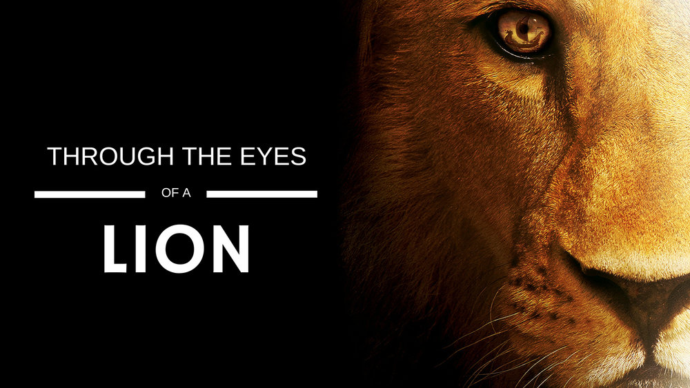 Where you see a storm, He sees an anchor. Jesus wants you to look at life through His eyes, the eyes of a LION