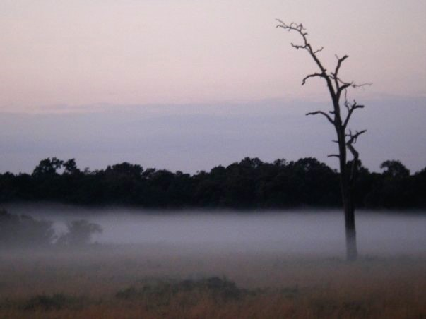 Fog over the savannah in Kenya's Masai Mara