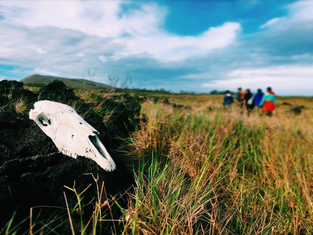 Rapa Nui Skull