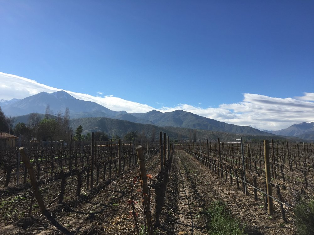 The Pacific-cooled air and warm sun, the mountains, ocean, and geographical diversity north-to-south make Chile a playground for world-class wines.