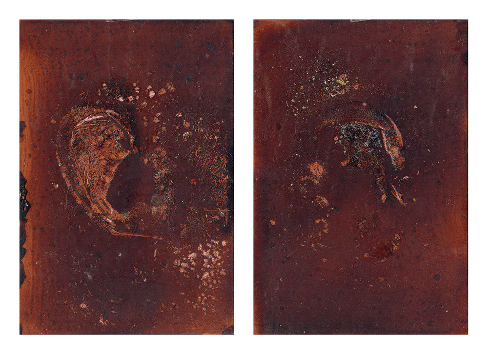 "GENTLE TRANSACTION VI, 2018  Oil of cadaver #50 on copper plate   7"" x 5"" ( 17.8 x 12.7cm)"