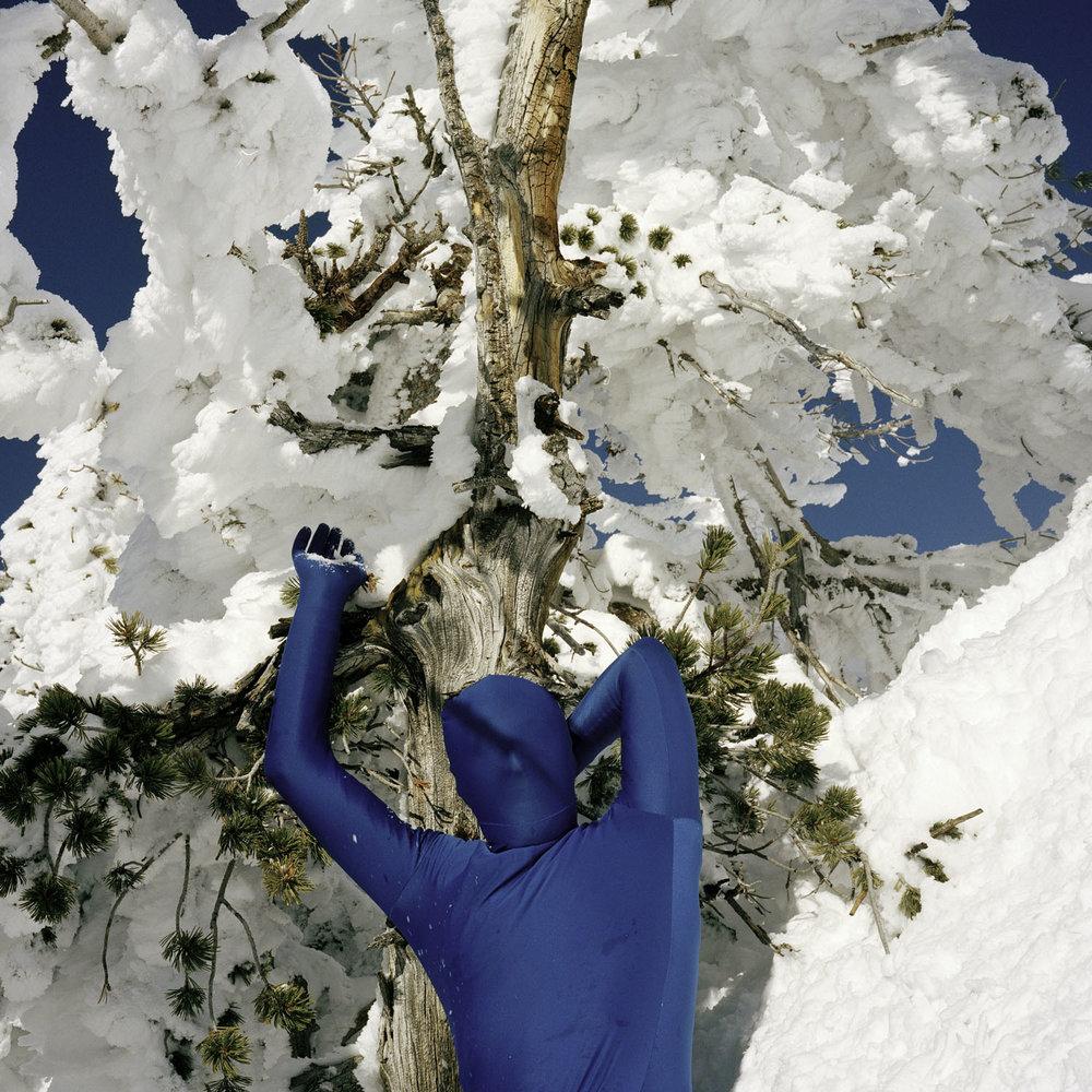 ORCHID. seasons - winter    Matthew Morrocco   DECEMBER 14 - 22, 2018