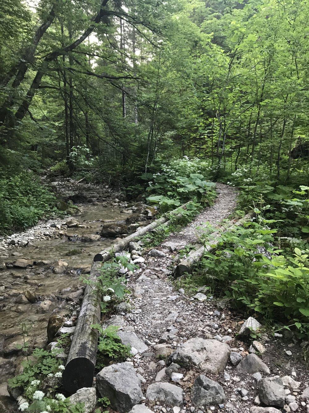 So sieht der Trail aus - mehr Zeit für Bilder war nicht...