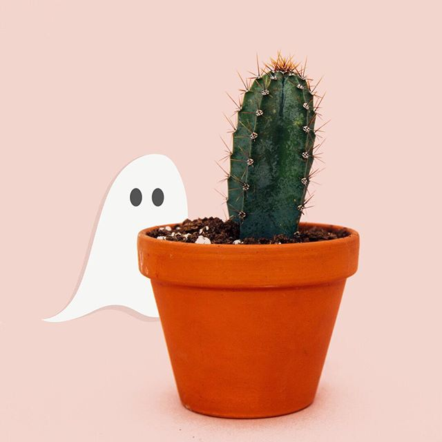 peek-a-BOO! 👻 Happy Halloween from Curious & Co! ⠀⠀⠀⠀⠀⠀⠀⠀⠀ #happyhalloween #scaryplant 👻: #designedbycuriousandco 📷: Charles Deluvio via @unsplash