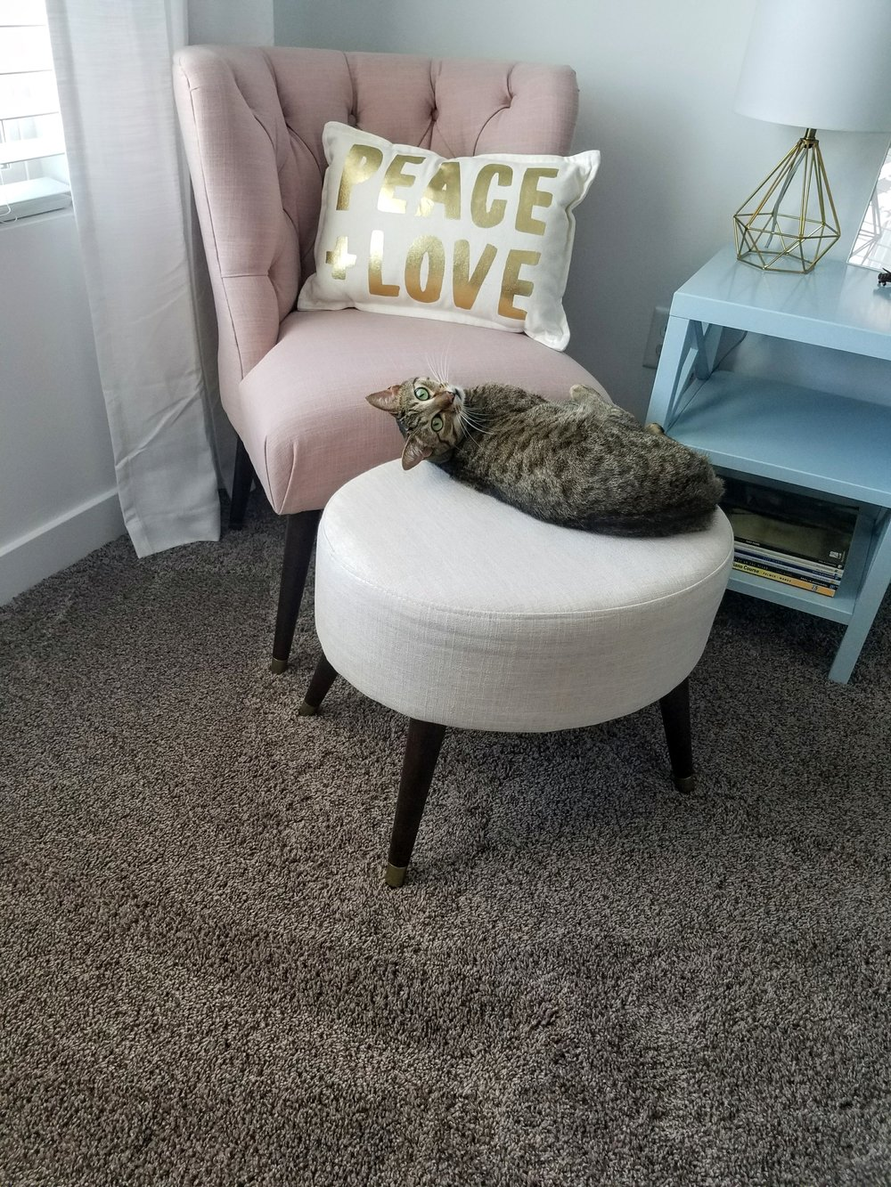 A little behind the scenes because the cats love it too!