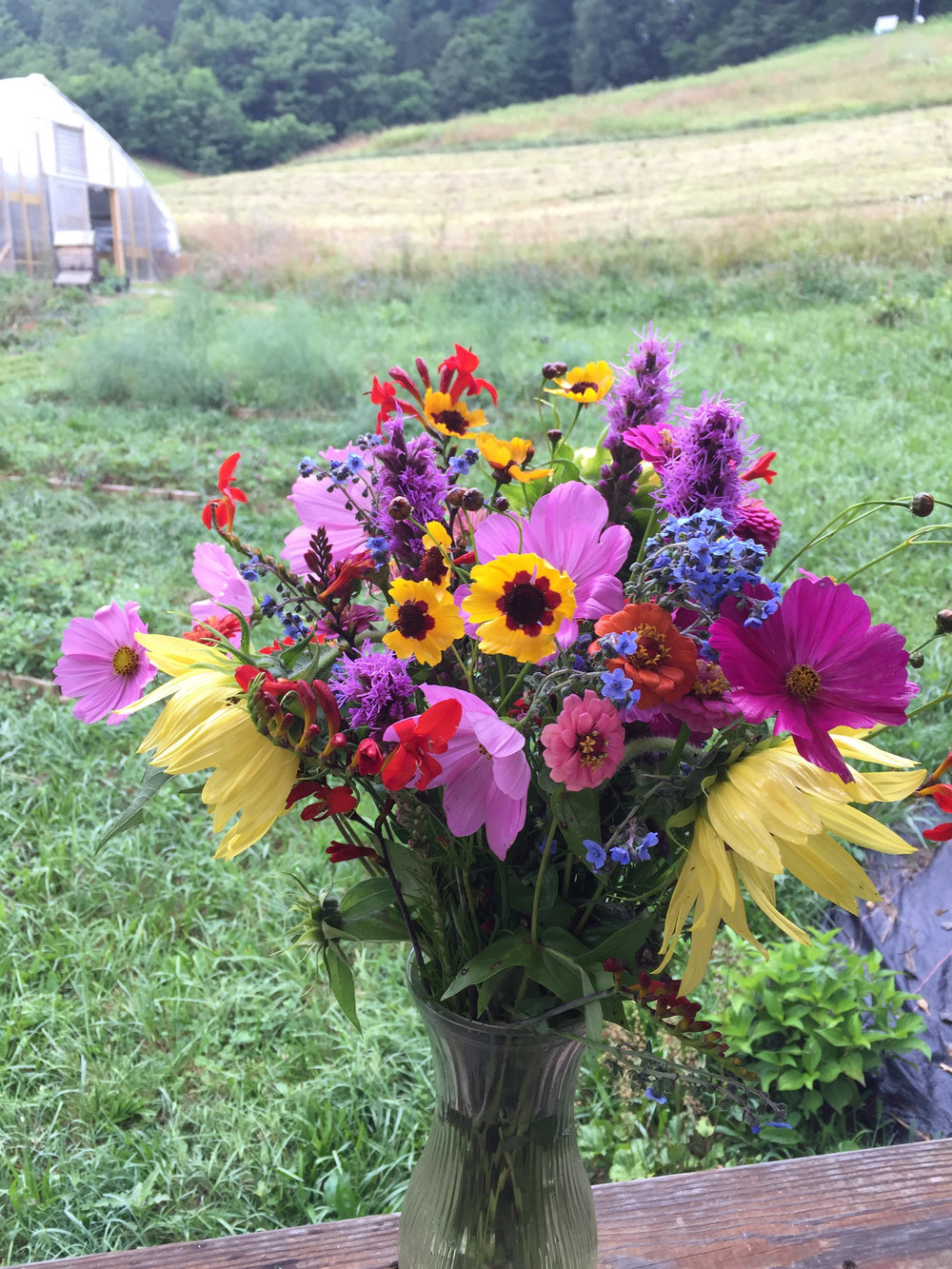 Flowers that were grown and harvested at Indigo Bunting Farm.