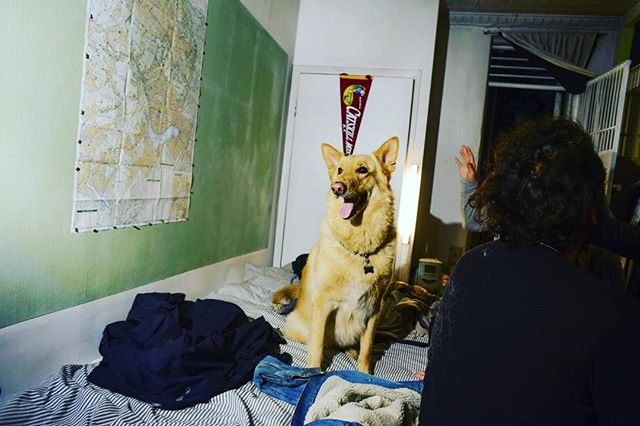 Great dog at our Human Hotel party last week in NY. Thanks for coming. We love this community. #communiy #dog