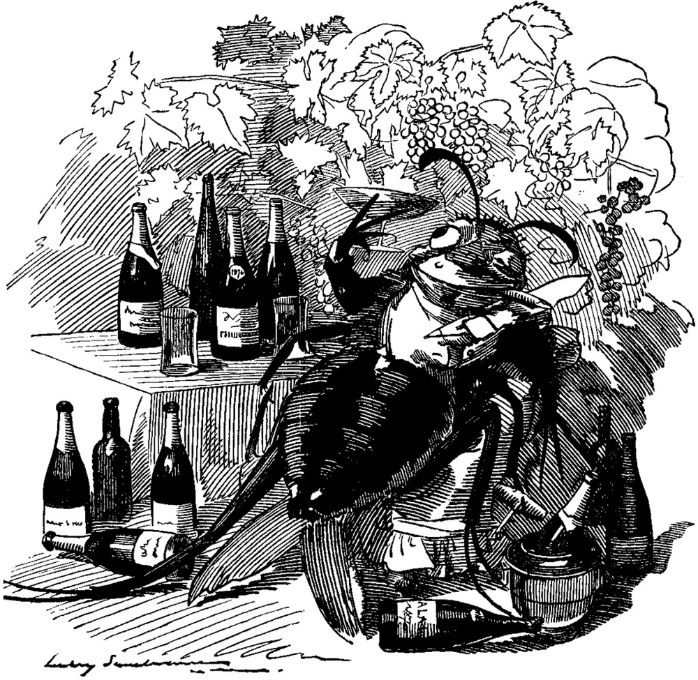 Vineyard Pests and Pestilences Phylloxera