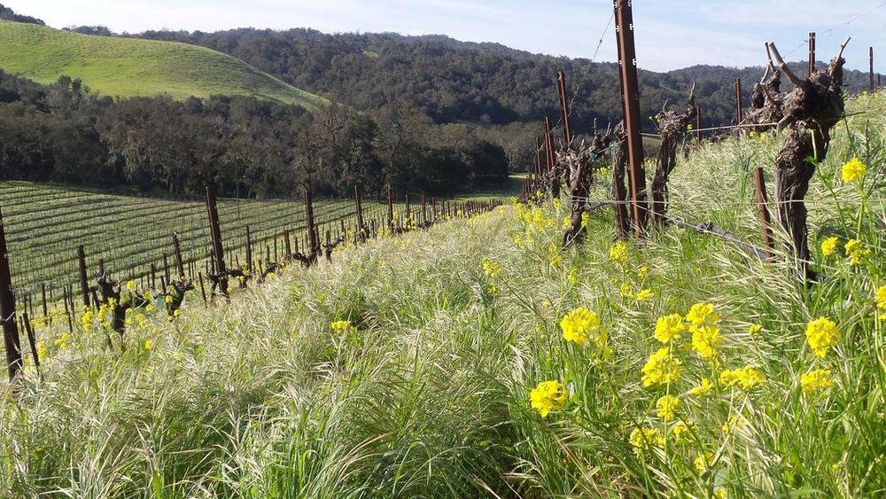 Los Angeles Times: California's vineyards are coming back from the brink of disaster thanks to the winter rains, ft. Tablas Creek | 03/23/17