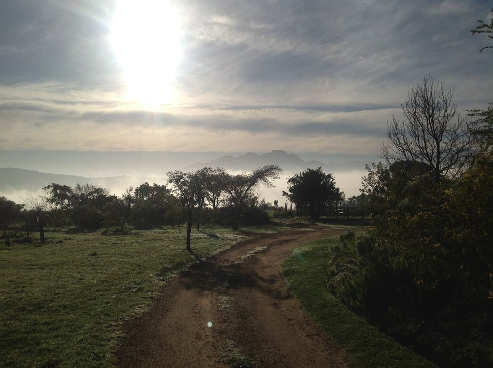 Misty morning (2).jpg