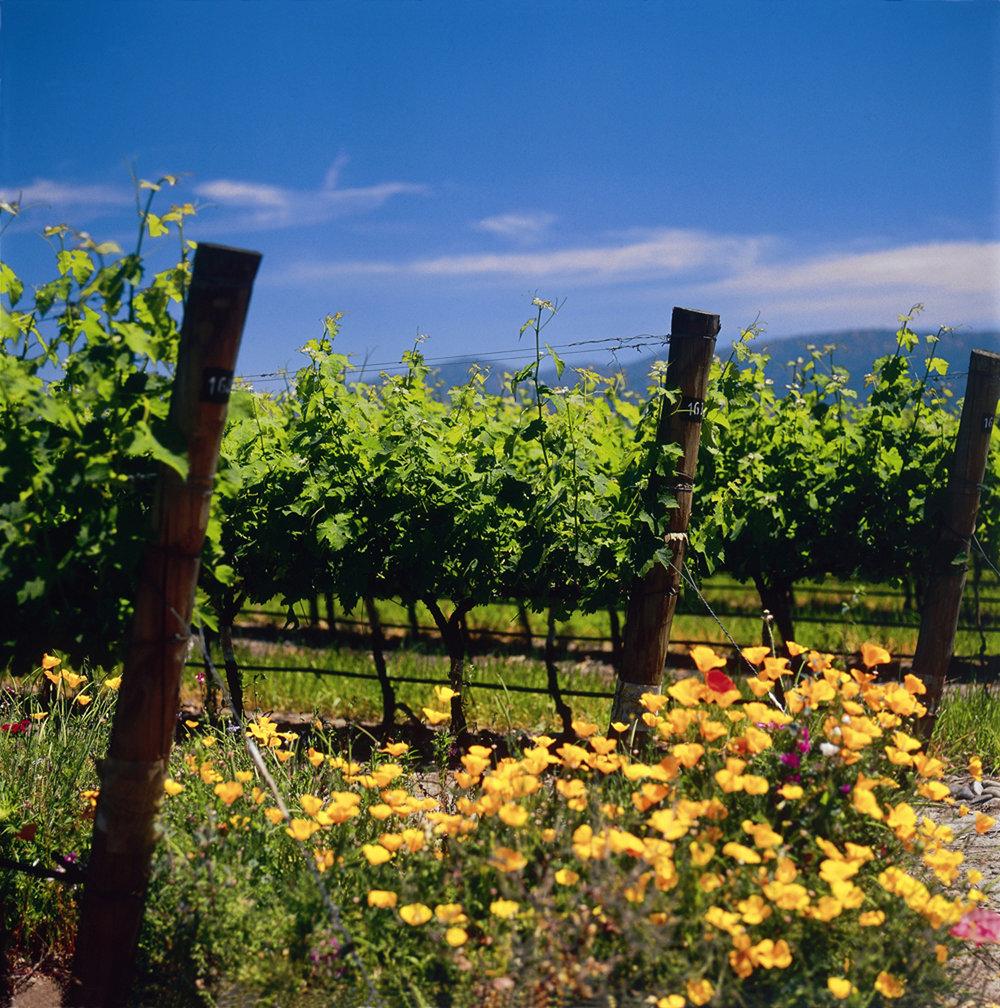 VineyardWithFlowers.jpg