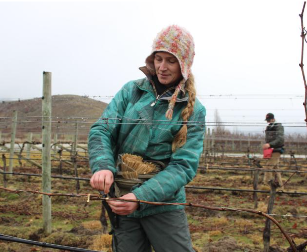 Otago Daily Times: Women leading the charge in viticulture contest, ft. Brenda Stringer, Peregrine Wines | 07/2017