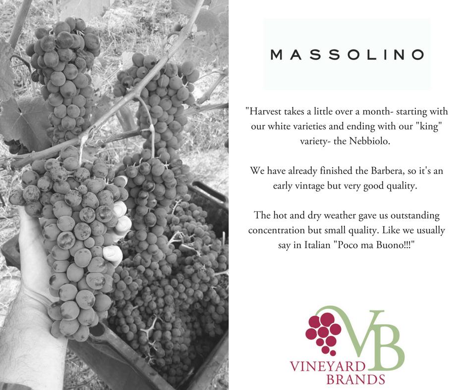 Harvest_Massolino.png