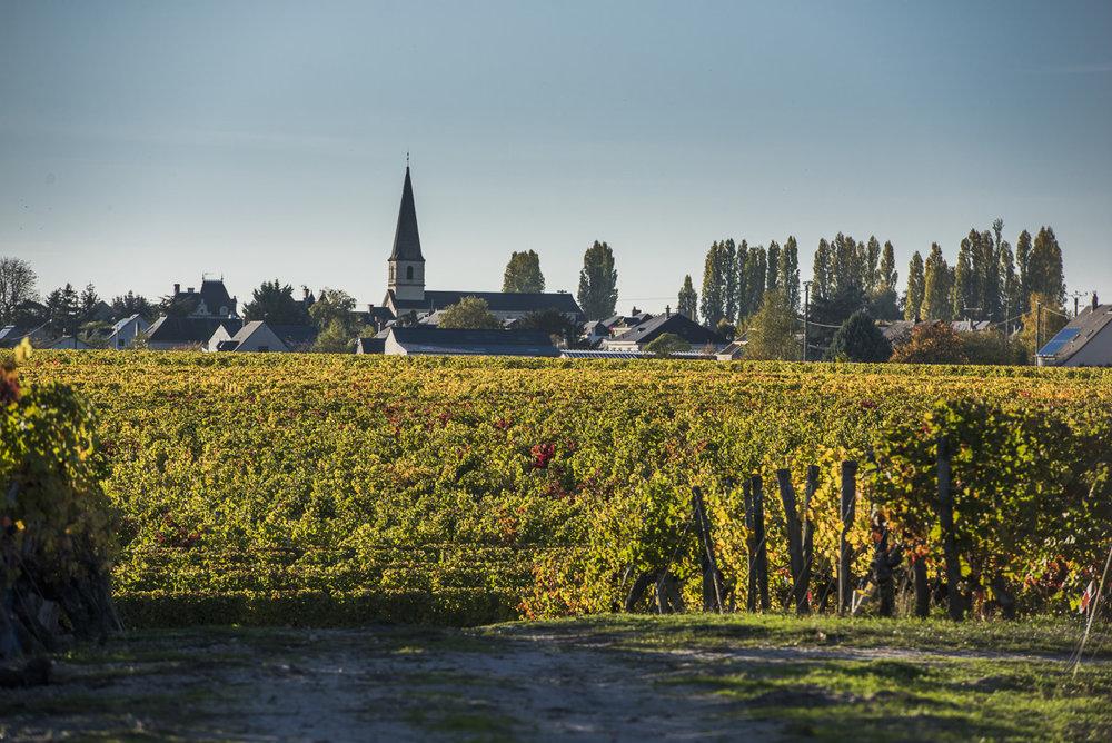 paysage d automne Saint Nicolas de Bourgueil.jpg