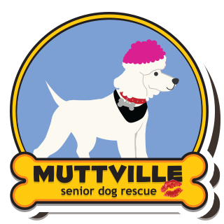 Skout Sid Muttville International Kissing Day
