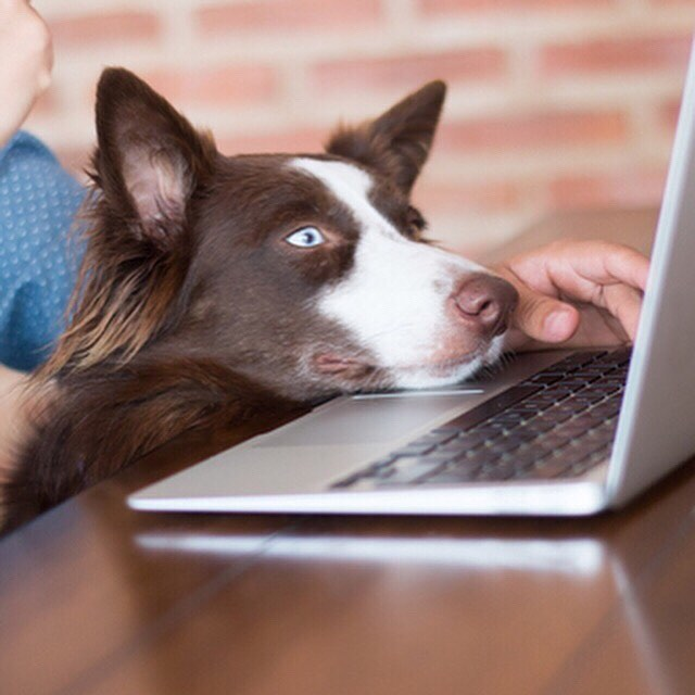 Are you bringing your #dog with you to #work tomorrow? #takeyourdogtoworkday