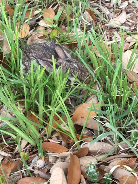 "Our Baby ""Easter Rabbit"" snuggles in the grass on Easter Sunday"