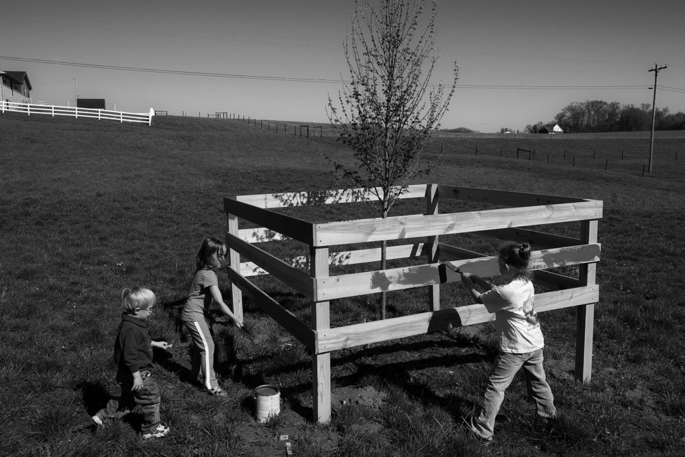 As a memorial to Red, who died of complications of Parkinson's disease, his family gathered to paint a fence around a young red sunset maple tree that was planted in the pasture on the family property. Kash Kendall, 2, left, and his cousins Merin Buck, 5, and her sister Maci, all of Jasper, were the first to begin painting the fence red.