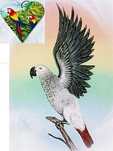 Personalized pet art and brooches. Mention Connecticut Parrot Rescue upon check out and a 10% donation will be made to CTPR. https://www.etsy.com/shop/ArtbyWeeze