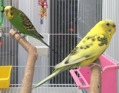 Congrats to Lemon and Lime who chose their new home in May 2017!