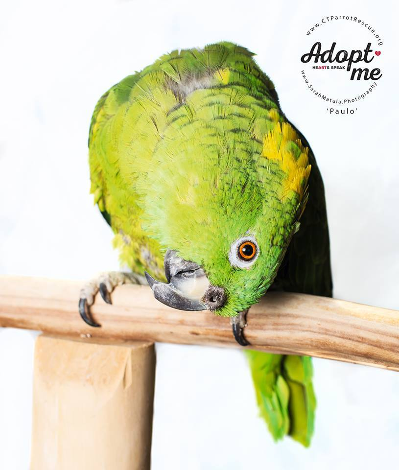 Congratulations to Paulo who chose a new mom and a parrot brother in May 2017!