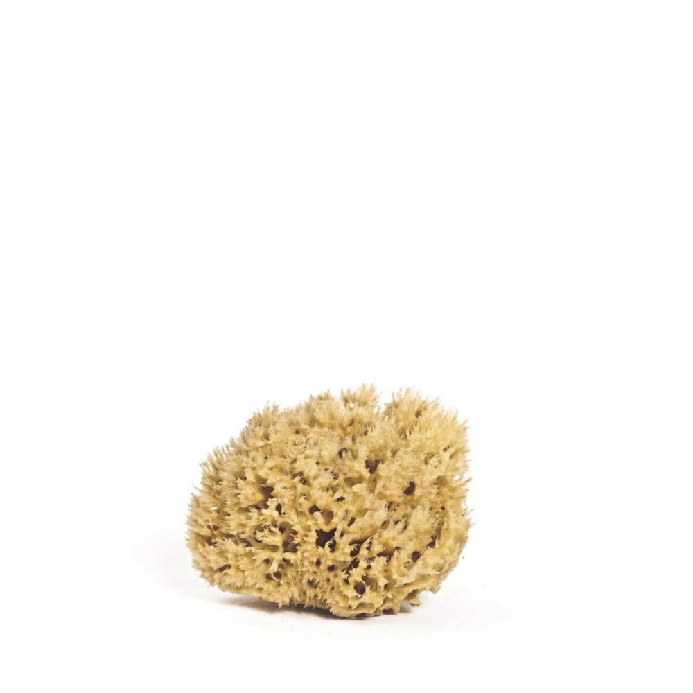 Body Sea Sponge - $45.00
