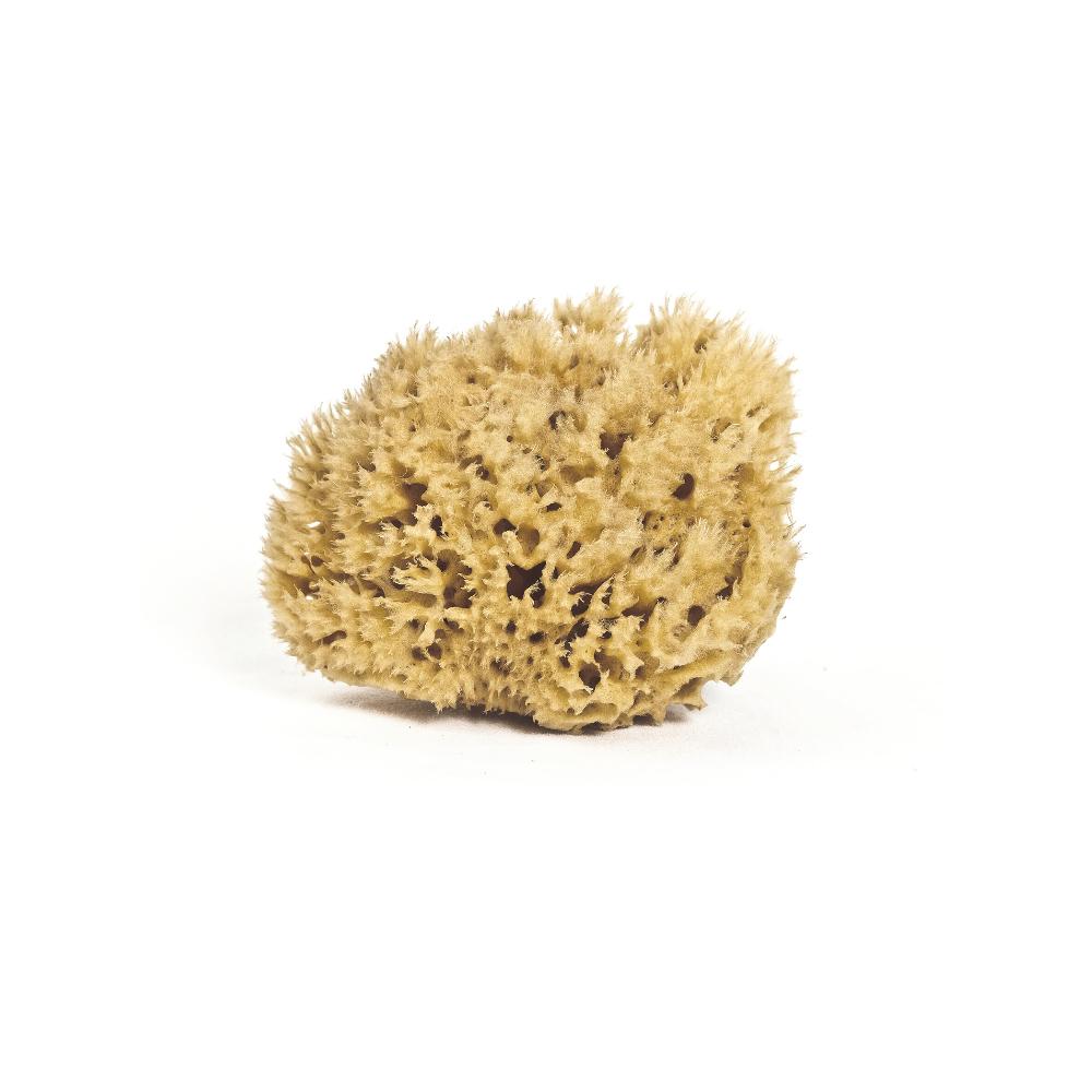 Honeycomb Body Sponge $45.00