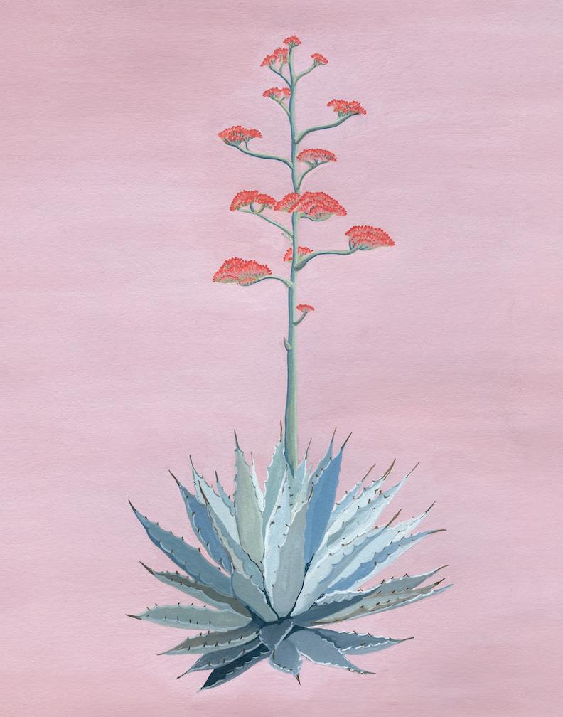 cacti-agave-11x14 copy.jpg