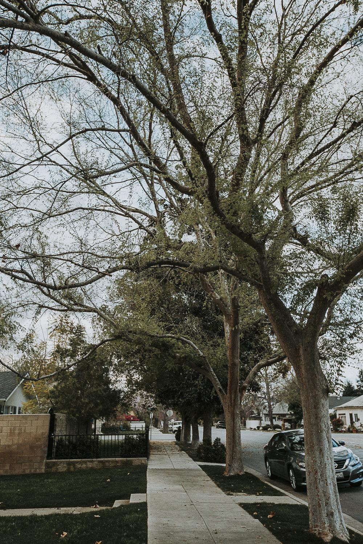 treelined_streets_lr-6.jpg