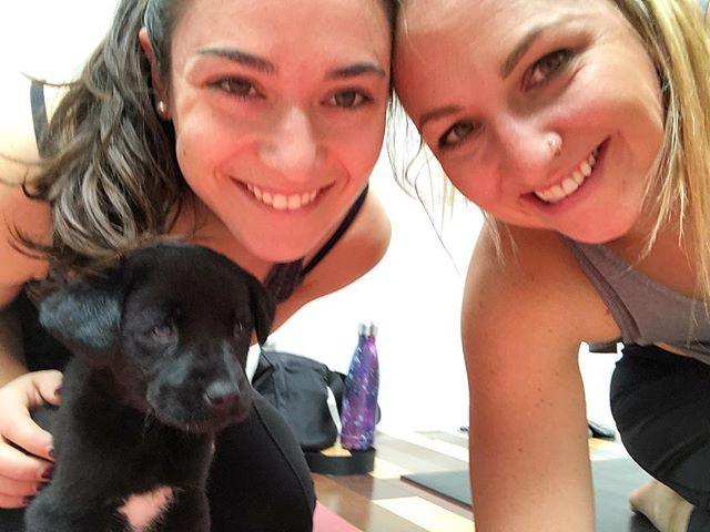 Doing our best puppy pose 🧘‍♀️🐶 💕 #pupsyoga