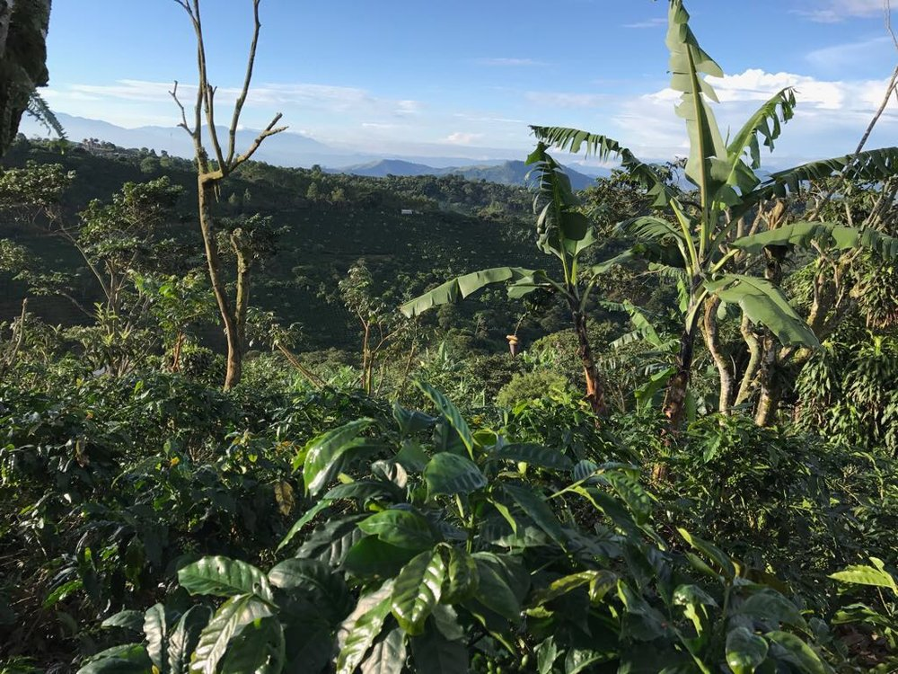 CafeConAmor_FarmView.JPG