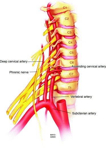 Mojos Got Your Back The Cervical Spine Mojo Thrive
