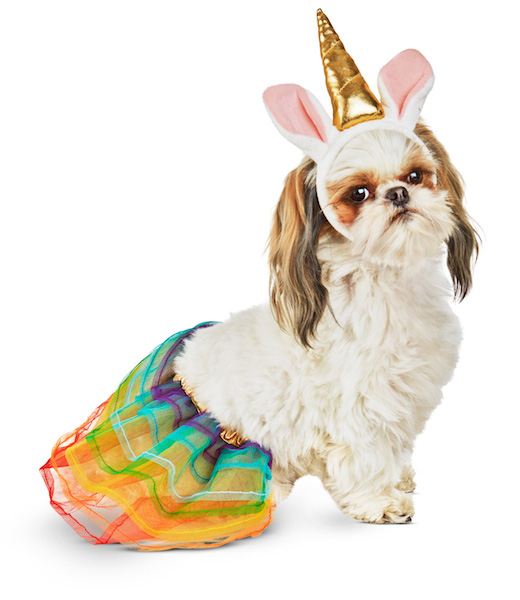 unicorn-dog-halloween-costume.jpg