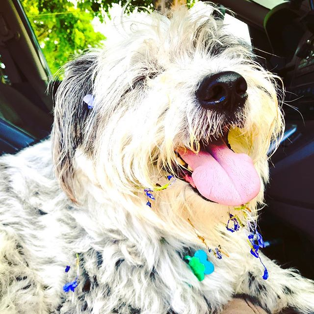 Happiness is this right here. 🌸🐶🌸 #dogs #flowers #happyface