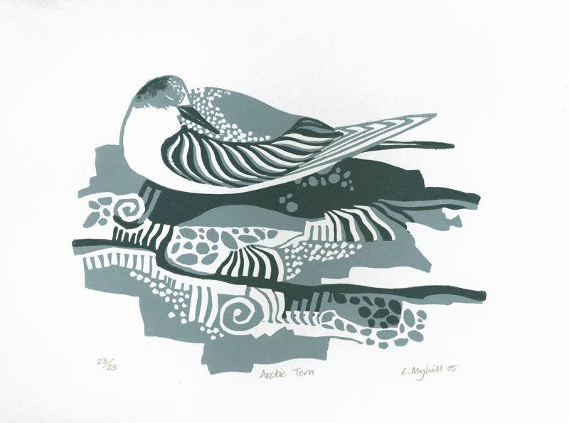 Arctic Tern.jpg