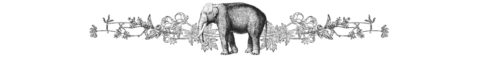 elephant plants.png