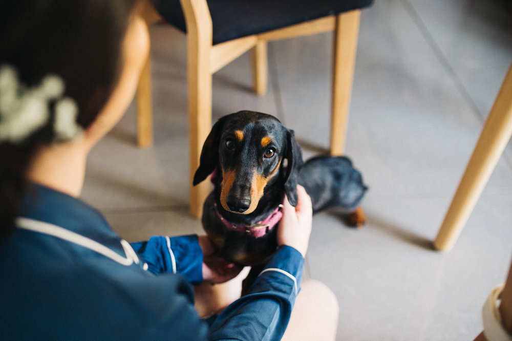 a daschund dog with a bow tie. ceremony at st georges hall liverpool, oh me oh my wedding reception, north west wedding photographer