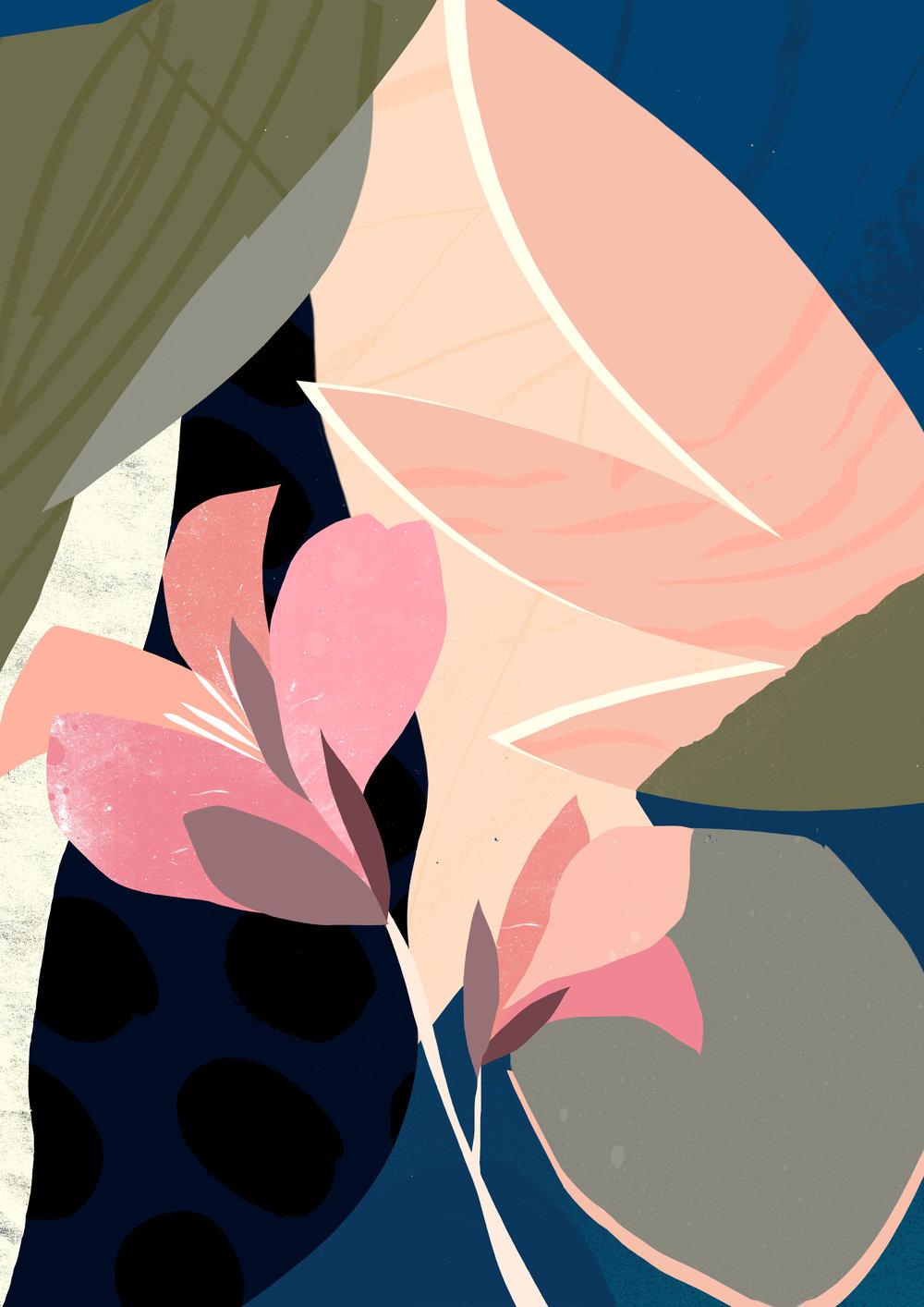 'Canna Lily'