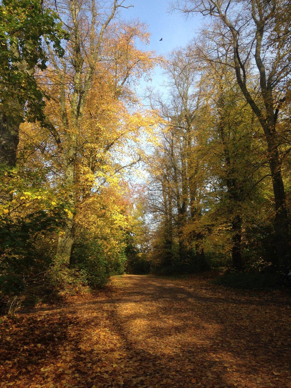 Φθινόπωρο στο Heath, η αγαπημένη μου εποχή