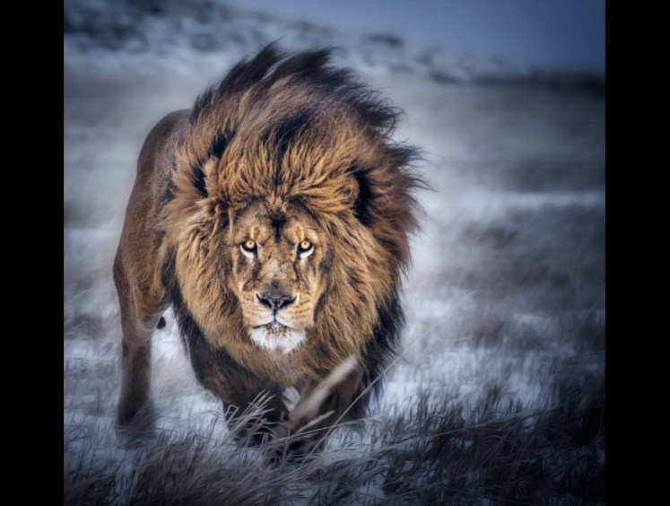 Photo Credit: Paul Keates